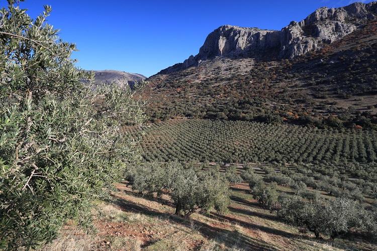 Blending für Bertollis einzigartige Olivenöle